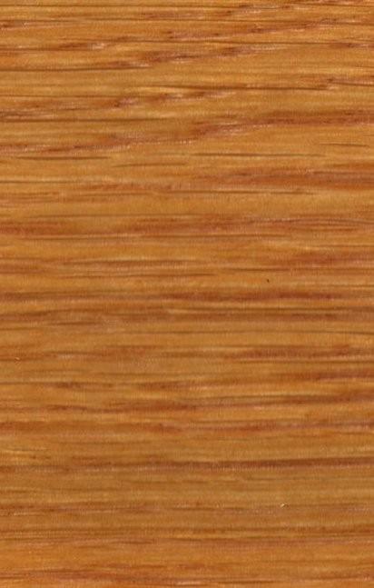 Dąb Sopur Żółcień 21 01